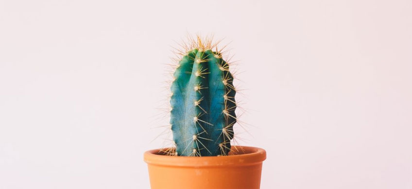 Ed the office cactus